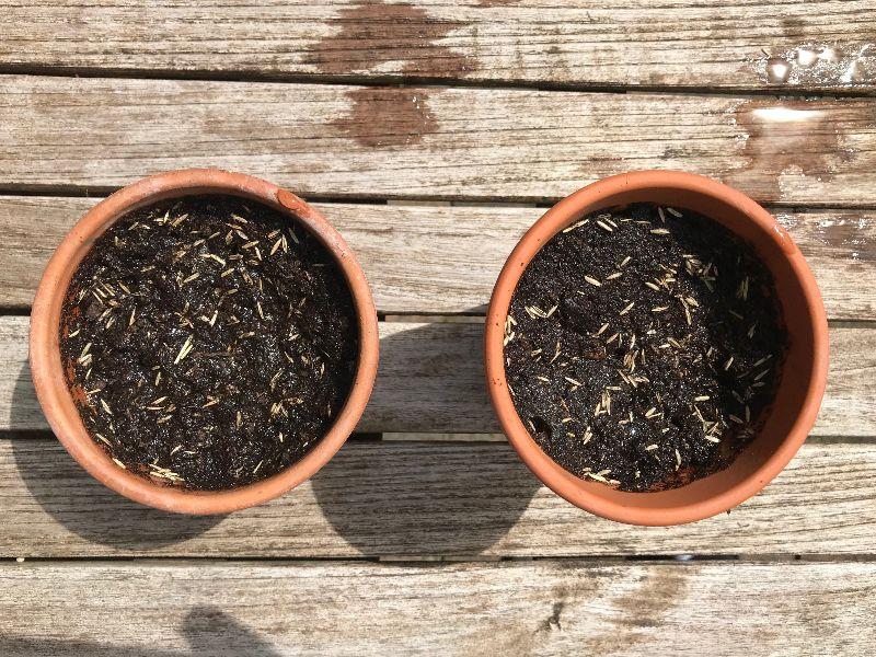 Fertig eingepflanzt