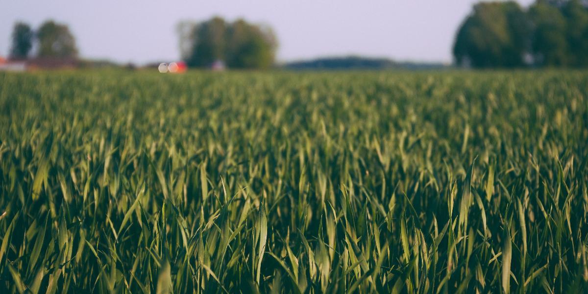 Rasen Säen Darauf Musst Du Achten Rasen Traum
