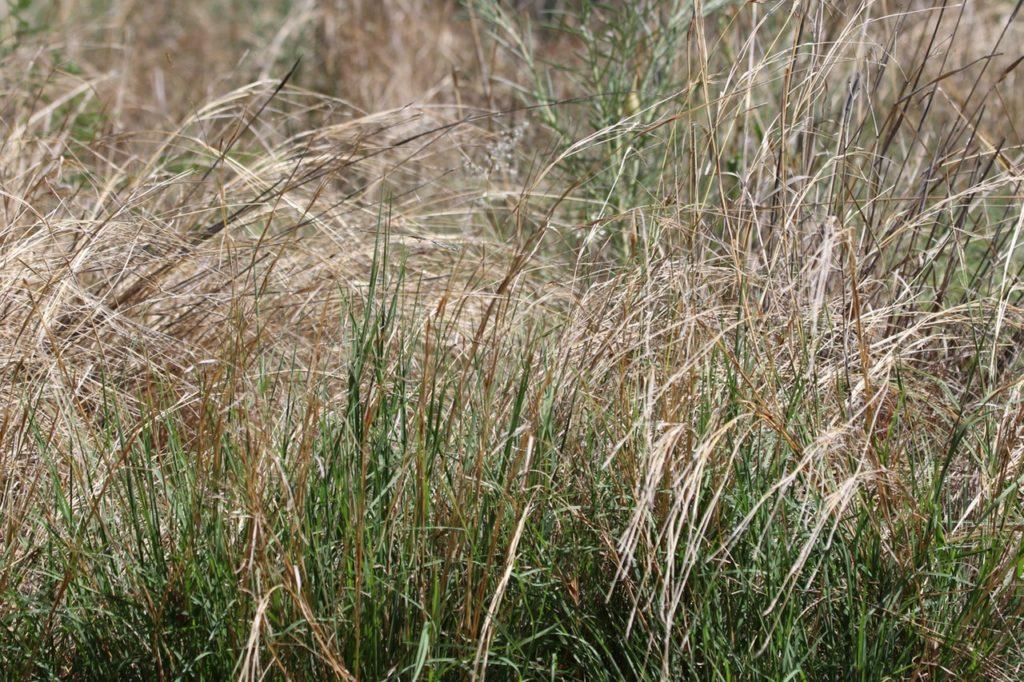 Vertrockneter Rasen retten - So wird der Rasen wieder grün - www.Rasen-Traum.de